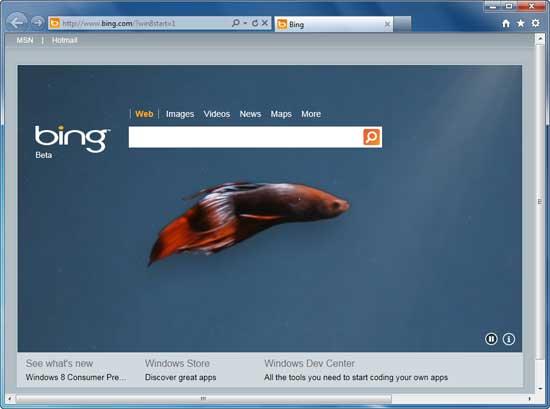 Bing-Homepage-with-betta-fish